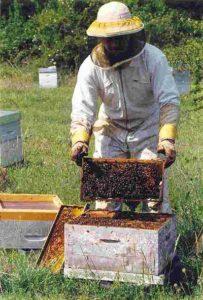 apiculure-ruchers-la-bonnechere