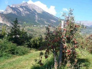 pommes-bio-production-ferme-la-civadille-chateauroux-les-alpes